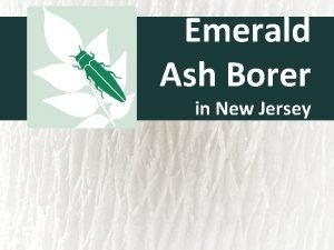 Emerald Ash Borer in New Jersey Emerald Ash