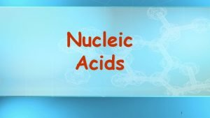 Nucleic Acids 1 Nucleic acids Store and transmit