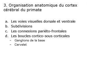 3 Organisation anatomique du cortex crbral du primate