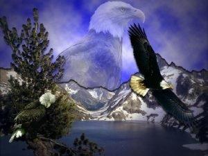 El guila es el ave que posee la