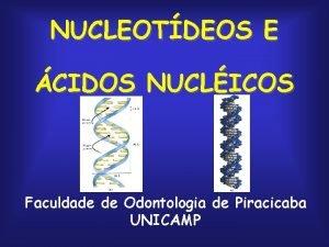 NUCLEOTDEOS E CIDOS NUCLICOS Faculdade de Odontologia de