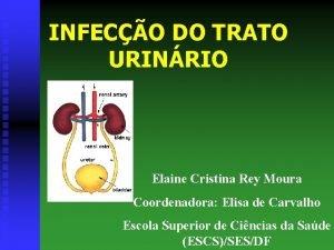 INFECO DO TRATO URINRIO Elaine Cristina Rey Moura