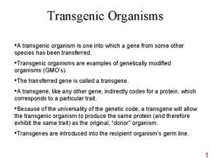 Transgenic Organisms A transgenic organism is one into