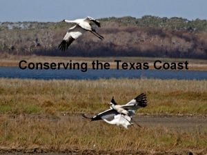 Conserving the Texas Coast Texas has almost 400