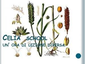 CELIA SCHOOL UN ORA DI LEZIONE DIVERSA Liceo