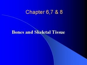 Chapter 6 7 8 Bones and Skeletal Tissue