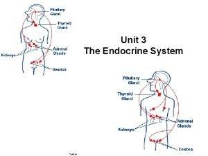 Unit 3 The Endocrine System Taktak Endocrine Glands