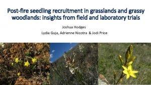 Postfire seedling recruitment in grasslands and grassy woodlands