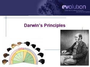 Darwins Principles AP Biology 2010 2011 Darwins finches