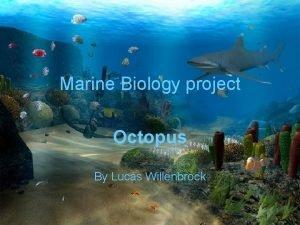 Marine Biology project Octopus By Lucas Willenbrock Octopus