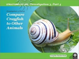 STRUCTURES OF LIFEInvestigation 3 Part 4 Compare Crayfish