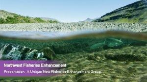 Northwest Fisheries Enhancement Presentation A Unique New Fisheries