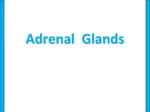 Adrenal Glands Significance The adrenal glands are complex