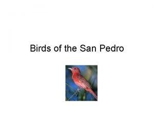 Birds of the San Pedro Introduction San Pedro