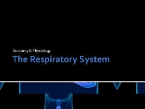 Anatomy Physiology The Respiratory System Organs of the