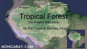 Tropical Forest The Amazon Rain forest By the