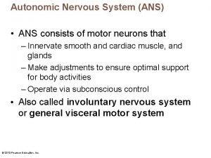 Autonomic Nervous System ANS ANS consists of motor