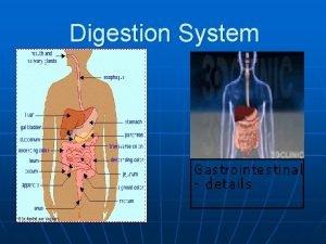 Digestion System n n Digestion process of breaking