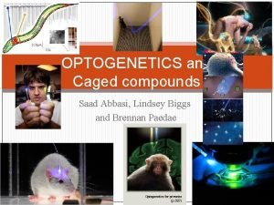 OPTOGENETICS and Caged compounds Saad Abbasi Lindsey Biggs