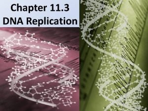 Chapter 11 3 DNA Replication DNA replication is