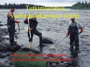 Tutkimustietoa vaelluskalakantojen tilasta Riista ja kalatalouden tutkimuslaitos esityksen