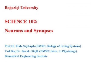 Boazii University SCIENCE 102 Neurons and Synapses Prof
