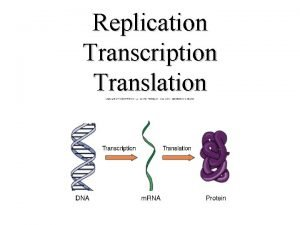 Replication Transcription Translation DNA 1 Double Stranded Helix