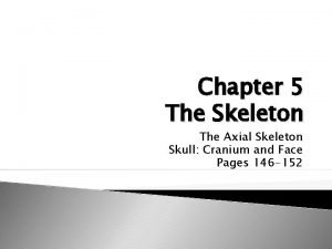 Chapter 5 The Skeleton The Axial Skeleton Skull