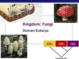 Kingdom Fungi Domain Eukarya Domain Eubacteria AP Biology
