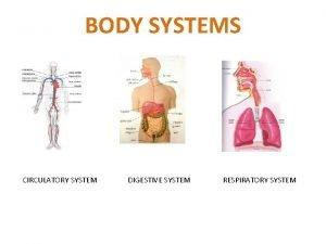 BODY SYSTEMS CIRCULATORY SYSTEM DIGESTIVE SYSTEM RESPIRATORY SYSTEM