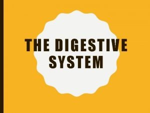 THE DIGESTIVE SYSTEM FUNCTIONS OF THE DIGESTIVE SYSTEM