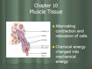 Chapter 10 Muscle Tissue l Alternating contraction and