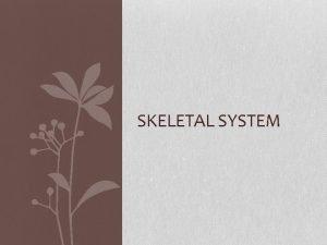 SKELETAL SYSTEM The function of the skeletal system