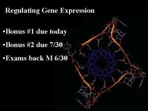 Regulating Gene Expression Bonus 1 due today Bonus