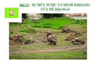 Bi 11 S HT NC V MUI KHONG