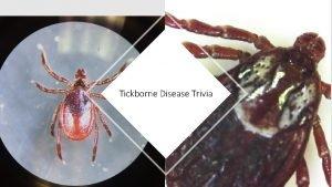 Tickborne Disease Trivia What is the scientific name