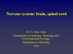 Nervous system brain spinal cord Dr L Kiss