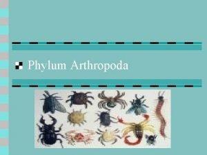 Phylum Arthropoda Phylum Arthropoda Facts n n Arthropods