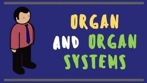 ORGAN and ORGAN SYSTEMS Our body is made