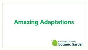 Amazing Adaptations What are adaptations Adaptations are features