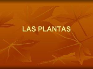 LAS PLANTAS REINO PLANTAS Son seres vivos de