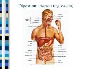 Digestion Chapter 11pg 354 358 Digestion the breaking