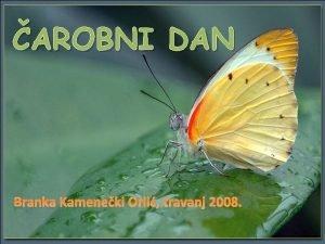 AROBNI DAN Branka Kameneki Orli travanj 2008 TO
