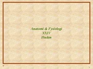 Anatomi Fysiologi XXIV Huden 1 Anatomi Fysiologi Lektion