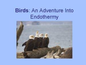 Birds An Adventure Into Endothermy Birds Flying machine
