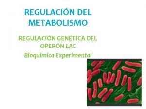REGULACIN DEL METABOLISMO REGULACIN GENTICA DEL OPERN LAC