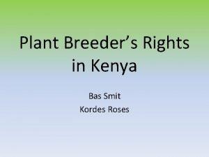 Plant Breeders Rights in Kenya Bas Smit Kordes