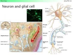 Neurology Neuron and glial cell JongMo Seo Neurology