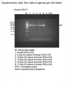 Supplementary data Raw data of agarose gel with