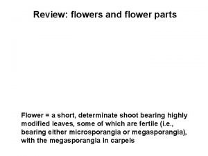 Review flowers and flower parts Flower a short